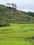 Rice Paddies at a Hillside, Antananarivo, Madagascar Photographic Print