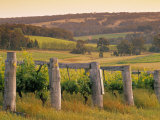 Vineyard, Margaret River, Western Australia, Australia Photographic Print by Doug Pearson