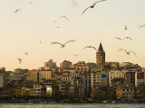 Seagulls Flock Above the Golden Horn, Istanbul, with the Galata Tower in the Background Fotografiskt tryck av Julian Love