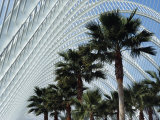 L&#39;Umbracale, City of the Arts and Sciences, This Large Tunnel Houses a Green House Photographic Print by Calum Stirling