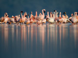 Greater Flamingos and Lesser Flamingos in a Lake, Lake Nakuru, Lake Nakuru National Park, Kenya Photographic Print