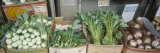 Organic Asian Vegetables in Containers at a Market Stall, Honolulu, Hawaii Photographic Print by  Panoramic Images
