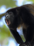 Close-Up of a Black Howler Monkey, Costa Rica Photographic Print