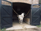 Horse Standing in a Stable, Middleton Place, Charleston, Charleston County, South Carolina, USA Photographic Print
