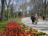 Tulips Bloom in Gulhane Park, Istanbul, Turkey Photographic Print by Julian Love