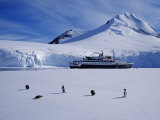 Antarctic Peninsula, Port Lockroy, Gentoo Penguins and Cruise Ship Clipper Adventurer, Antarctica Photographic Print by Allan White