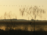 Bangweulu Swamps, Lines of Waterfowl Flying to their Feeding Grounds at Dawn, Zambia Photographic Print by John Warburton-lee