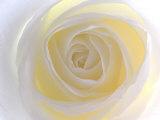 Rosa Fotografie-Druck von Nadia Isakova
