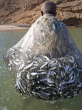 Muscat Region, Bandar Khayran, A Old Fisherman Fishes for Sardines with a Traditional Net, Oman Photographie par Mark Hannaford