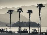 Piedmont, Lake Maggiore, Borromean Islands, Stresa, Lakefront Palms with Isola Bella, Italy Photographie par Walter Bibikow