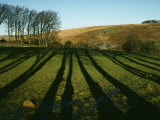 Beech Trees Cast Long Winter Shadows at Batworthy, Near Chagford Photographic Print by M. Max