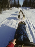 View from the Back of a Dogsled, Alaska, USA Photographic Print by John Warburton-lee