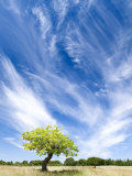 Tree and Clouds, Provence, France Photographic Print by Nadia Isakova