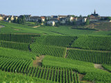 Marne, Champagne, Cramant Village and Vineyards, France Photographic Print by Steve Vidler