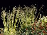 Tierra Del Fuego, Parque National Tierra Del Fuego, Wild Grass, Argentina Photographic Print by John Warburton-lee