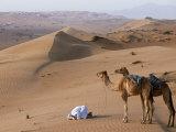 Kneeling to Pray in Desert, Holding Camels by Halters to Prevent Them Wandering Off Amongst Dunes Photographie par John Warburton-lee