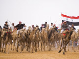 Camel in Paddock, Races Held Every Year as Part of Palmyra Festival, Syria Photographic Print by Julian Love