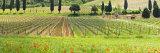 Traditional Tuscan Landscape, Valle De Orcia, Tuscany, Italy Photographic Print by Nadia Isakova