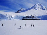 Wiencke Island, Port Lockroy, Gentoo Penguins on Sea-Ice with Cruise Ship Beyond, Antarctica Photographic Print by Allan White