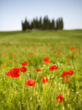 Tuscan Landscape, Tuscany, Italy Photographic Print by Doug Pearson