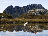 Reflected in Tarn on &#39;Cradle Mountain - Lake St Clair National Park&#39;, Tasmania, Australia Photographic Print by Christian Kober