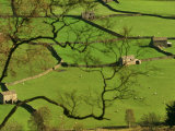 Swaledale, Drystone Walls and Field Barns in Valley Floor of Gunnerside in Yorkshire Dales, England Photographic Print by Paul Harris