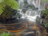Longshan Temple Waterfall with Swimming Koi Fish, Taiwan Photographie par Christian Kober