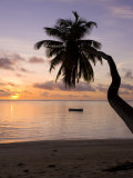 Seychelles, Mahe Island, Horizontal Palm, Fairyland Beach, Dawn Photographic Print by Walter Bibikow
