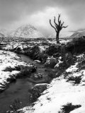Lonely Tree in Rannoch Moor, Scotland, UK Fotografisk tryk af Nadia Isakova