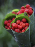 Wild Raspberries Held in the Leaf of a Porcelaine Rose, Sao Tomé and Principé Photographic Print by Camilla Watson