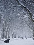Hyde Park Snow Scene, London, England, UK Photographie par Neil Farrin