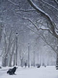 Hyde Park Snow Scene, London, England, UK Photographic Print by Neil Farrin