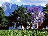 Cape Dutch Farmstead Vineyard Near Franschoek, Western Cape, South Africa Photographie par John Warburton-lee