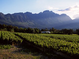 Vineyard at Franschoek, Western Cape, South Africa Photographic Print by John Warburton-lee