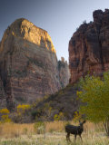 Utah, Zion National Park, the Great White Throne, USA Photographic Print by Alan Copson