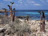 Socotra Island Ies in Arabian Sea, 180 Miles South of Arabian Peninsula Photographic Print by Nigel Pavitt