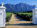 White Stuccoed Pillars at the Entrance to Bellingham Vineyard Photographic Print by John Warburton-lee
