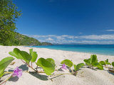 South Pacific, Fiji, Kadavu, Deserted Beach on the East Coast of Yaukuve Island Fotografisk tryk af Paul Harris