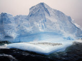 Scotia Sea, Chinstrap Penguins on Iceberg, Antarctica Photographic Print by Allan White