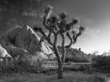 Alan Copson - California, Joshua Tree National Park, USA Fotografická reprodukce