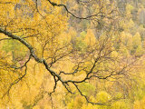 Autumn Wood, Cairngorms National Park, Highlands, Scotland, UK Photographic Print by Nadia Isakova