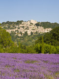Lacoste and Lavender Fields, Luberon, Vaucluse Provence, France Photographic Print by Doug Pearson