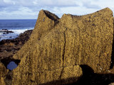 Supine Form of a Finely Chiselled Moai or Stone Head, at Ahu One Makihi on the South Coast Near to  Photographic Print by John Warburton-lee