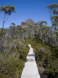 Barn Bluff on the Overland Track, Tasmania, Australia Photographic Print by Julian Love