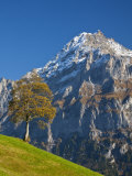 Autumn Color and Alpine Meadow, Wetterhorn and Grindelwald, Berner Oberland, Switzerland Photographic Print by Doug Pearson