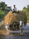 Myanmar, Burma, Bagan, A Farmer Takes Home an Ox-Cart Load of Rice Straw for His Livestock Photographie par Nigel Pavitt