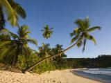 Seychelles, Mahe Island, Anse Takamaka Beach, Palm Photographic Print by Walter Bibikow