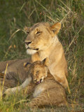 Lioness with Cub, Masai Mara National Reserve, Kenya, East Africa, Africa Photographic Print by James Hager