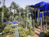 Sub-Tropical Jardin Majorelle in the Ville Nouvelle of Marrakech Photographic Print by Julian Love