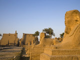 Avenue of Sphinxes Leading Up to Luxor Temple, Egypt Photographic Print by Julian Love